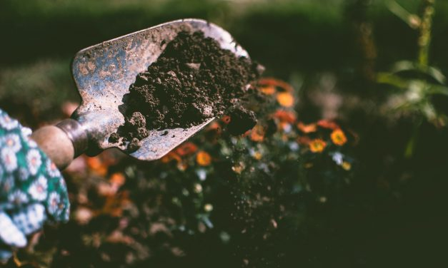 Is Your Soil Ready For Springtime?