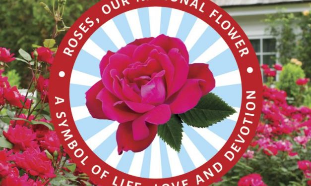 Star® Roses and Plants Launches National Flower Campaign