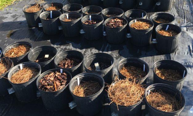 Choosing an Organic Mulch for Landscape Weed Control