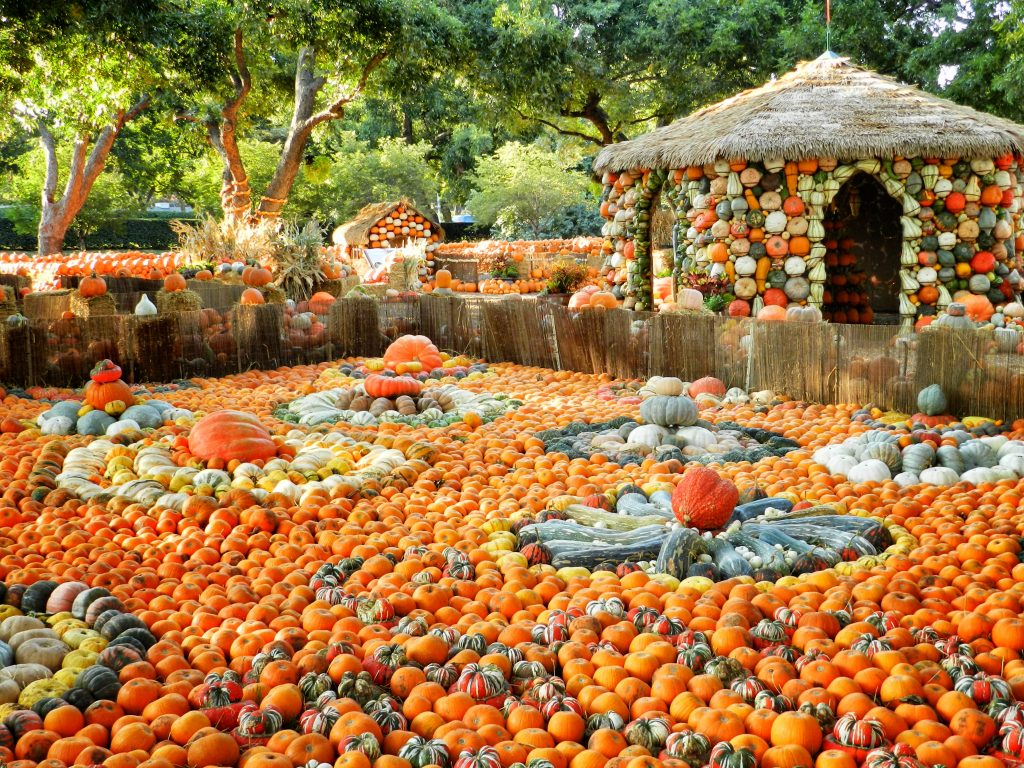 Pumpkin art at the Dallas Arboretum