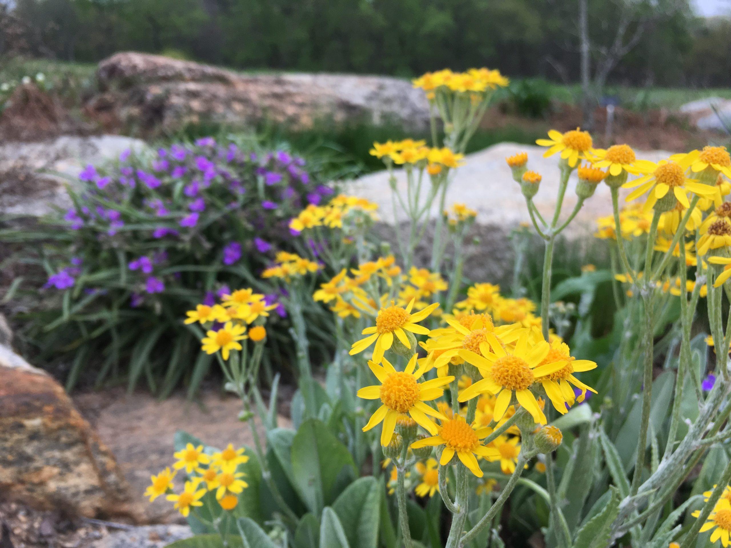 Granite Outcrop South Carolina Botanical Garden