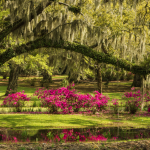 Top 10 Gardens in the South: Jungle Gardens