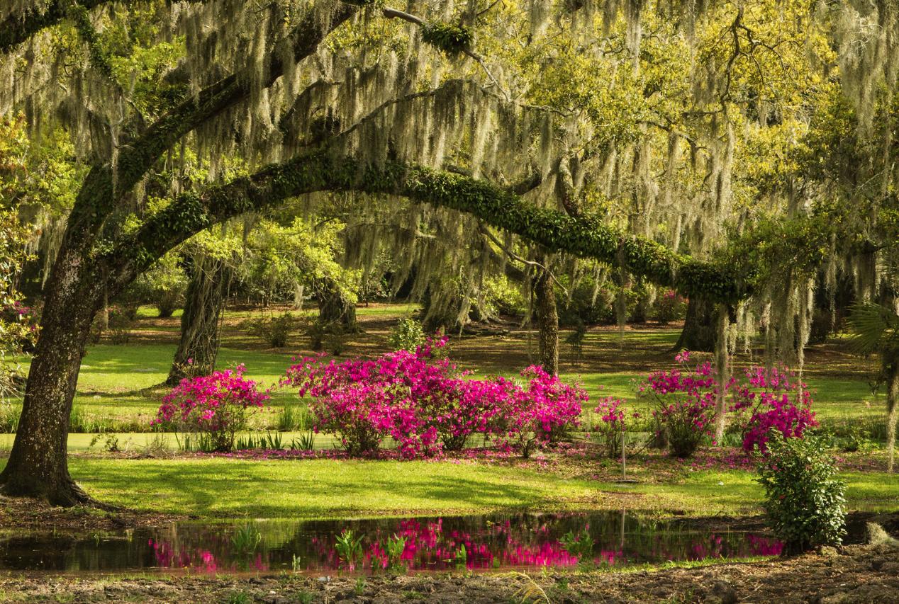 Jungle Gardens on Avery Island in Louisiana