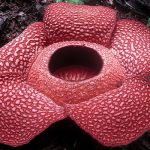 The 7 strangest plants in the world