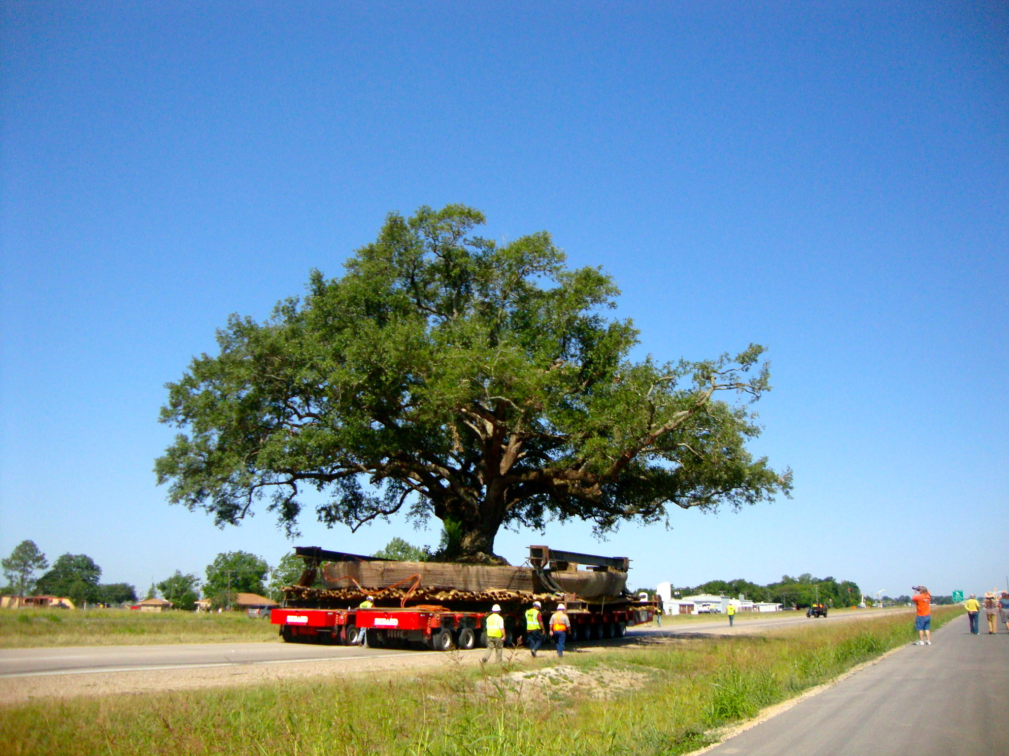 EDI is in the business of saving trees--by moving them.