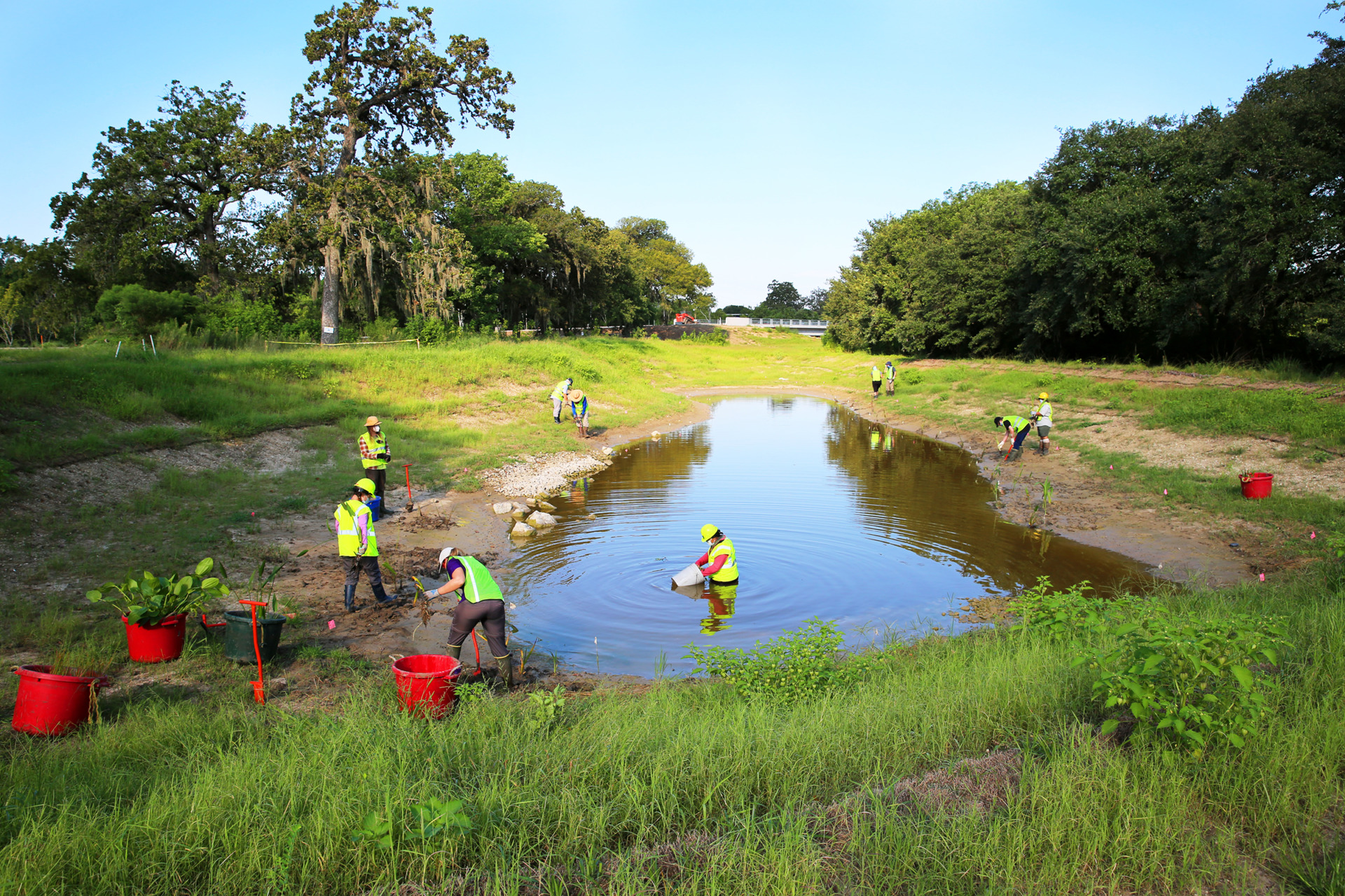 The Texas A&M AgriLife Extension Service recently began planting a 5-acre stormwater wetland area at the Houston Botanic Garden