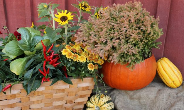 What To Plant This Fall