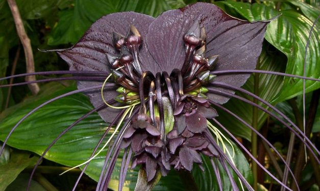 6 Spooky Plants for Halloween