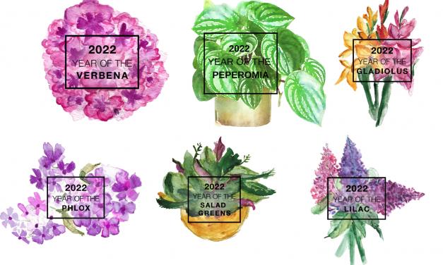 Houseplants of the Year