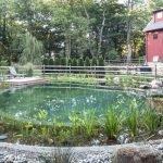 BioNova's Natural Pools