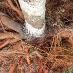 Inspecting & Maintaining Tree Roots