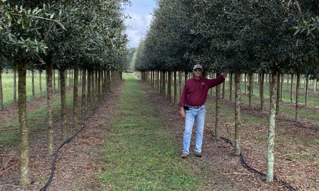 Evaluating Better Trees